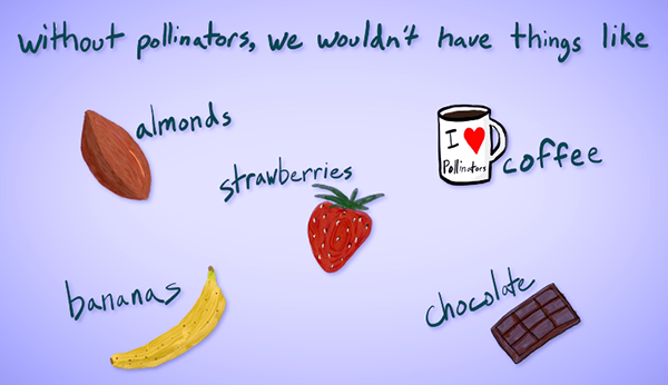 Without pollinators, we wouldn't have things like: almonds, bananas, strawberries, coffee, or chocolate